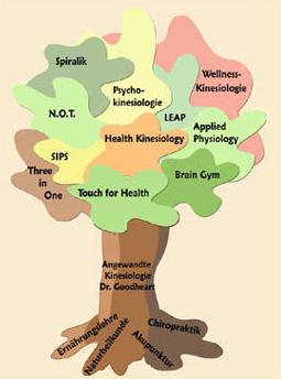 Kinesiologie Stammbaum