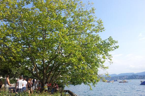 Handlesen am See Zürich